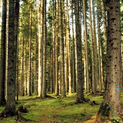 Parco Naturale Paneveggio Pale di San Martino - Dolomiti - Trentino