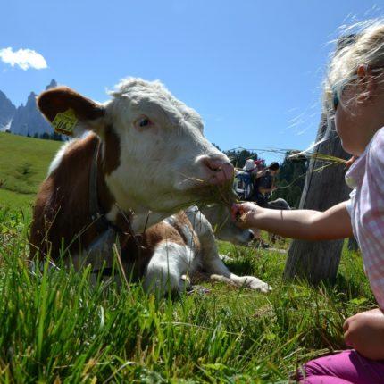 vacanze estive - Hotel Isolabella Primiero - Trentino