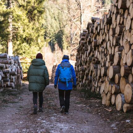 Cataste di legna - Trentino