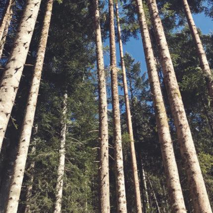 le foreste del Trentino