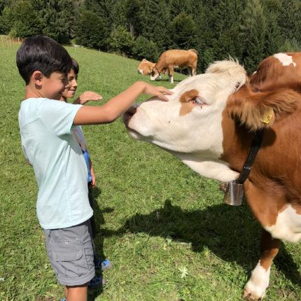 Bambini accarezzano le mucche al pascolo