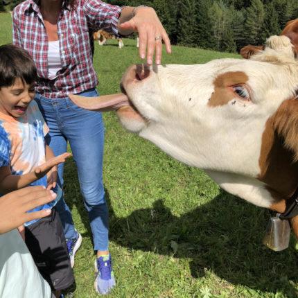 Bambini con le mucche